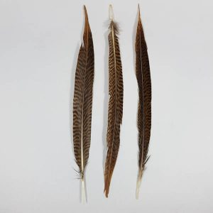 Golden Pheasant Tail Small 30cm