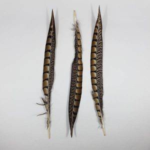 Lady Amherst Pheasant Tail 30cm