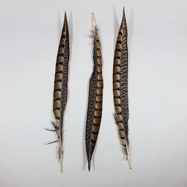 Lady Amherst Pheasant Tail 30cm